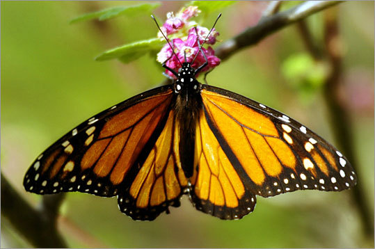 According to the government's report, UMass was awarded more than $800,000 to study the circadian clocks of monarch butterflies.