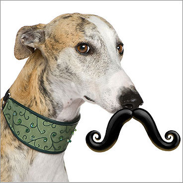 Stache Fetch Toy Price: $11.99 For your dog A fetch toy and fashion all in one. Medium, large, and extra-large pups can go incognito - or for laughs - by biting onto the ball part of this fetch toy. It's made of natural rubber and is slightly smaller than a tennis ball. Junior and mini sizes to be released in spring 2010.