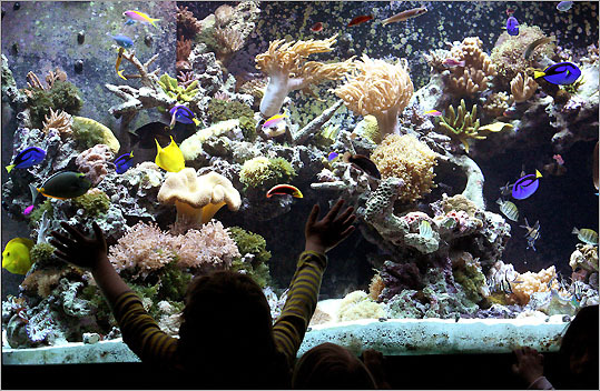 The coral reef tank at the Ocean Explorium hosts a rainbow of species from all over the South Pacific.