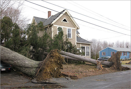 One reader captured the sight of huge trees down around neighbors' houses on Myrtle Street in Amesbury.