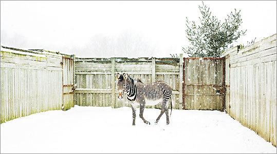 Matt Eich, 'The Wilds'