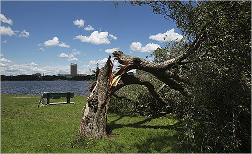 Another view of toppled trees along the Charles River.