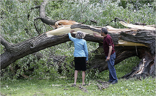 A grove of weeping willow trees was toppled by the storm over the weekend on the Esplanade along the Charles River. Diane Dalmeida and David Gouverneur got a closer look at one of the trees.