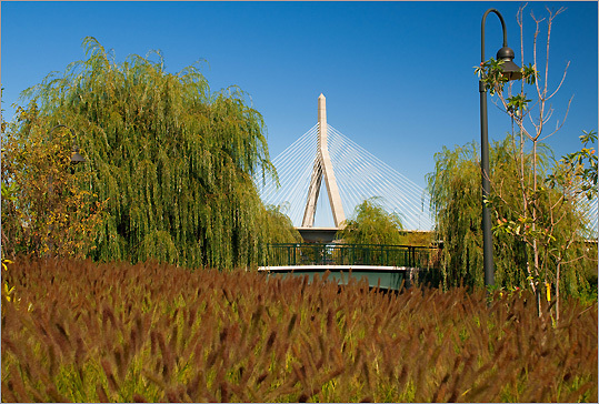 Wendy D. Burns of Boston caught the Zakim Bridge between the brush.