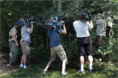 The media along with members of the US Department of Agriculture looked for the beetle today. The beetles are believed to have come from China and mainly attack hardwood trees, including maples, elms, willows, and birches. There are no known predators to stop the spread of the beetles, state officials said.