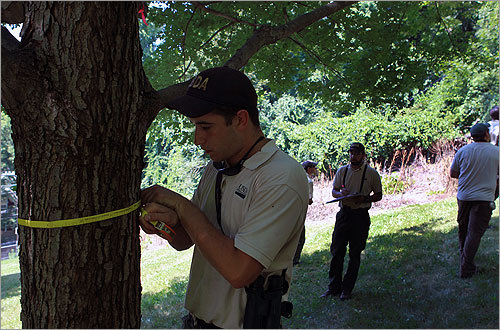 Experts marked trees within the zone. After the beetles were discovered in Worcester in 2008, more than 17,000 infested trees were cut down. Another 10,000 were cut down because of their proximity to the infestation.