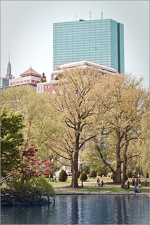 Katie Conklin of Rockland took this photo of the Public Garden in May. 'It was a gorgeous day and there wasn't a cloud in the sky!' she wrote.