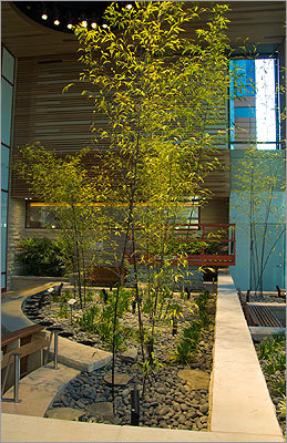 Dana-Farber's Yawkey Center will bring nature indoors with the two-story Thea and James Stoneman Healing Garden, which features seasonal flowers, shrubs, and plants, including stands of bamboo that will be nurtured by grow lamps in the ceiling. Next to the Healing Garden, and separated by glass walls, is the Richard P. and Clair W. Morse Conservatory, which offers a plant-free environment for patients with allergies, compromised immune systems, or other health issues.