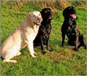 AKC most-registered dog breeds in 2010