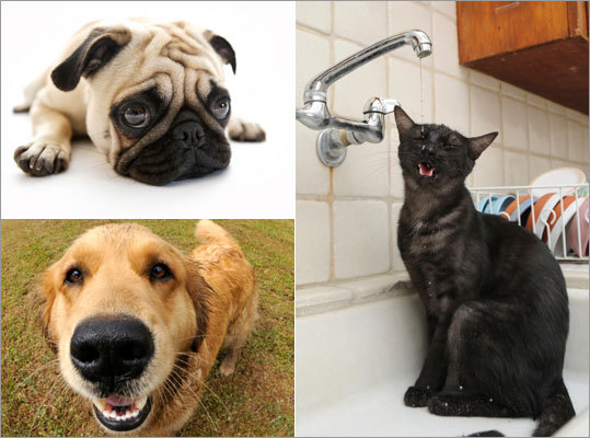 Do you know just how harmful some of your household items can be if ingested by your pet? Take steps to protect little Fluffy by checking out the ASPCA's list of the 10 worst toxins ...