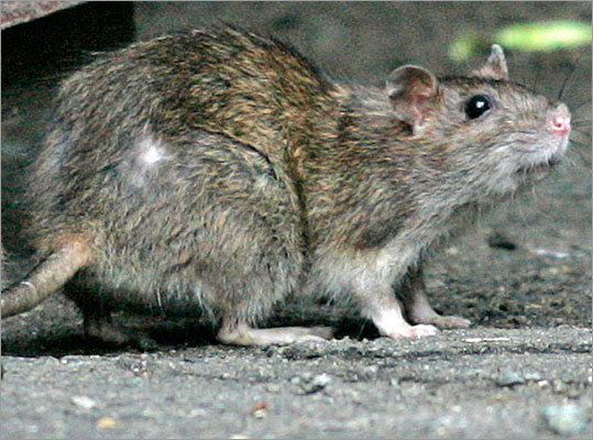 3. Rodenticides The food in baits and traps to catch mice and rats can sometimes cause seizures, internal bleeding, and kidney failure. Place traps where pets cannot get to them.