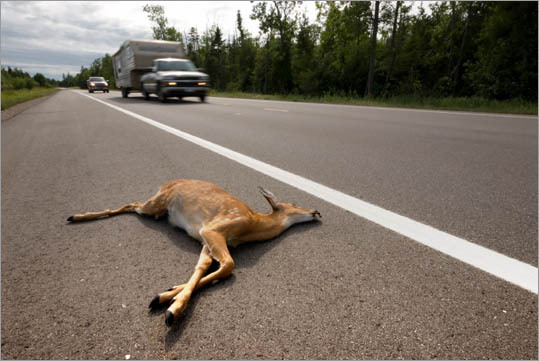 Road kill removal specialist Average salary: $30,000 The job: These workers extricate and remove dead animal carcasses from highways, roadways, and other passageways to dispose of the remains and to prevent potential accidents. Scary to people with: Necrophobia (dead things) and zoophobia (animals)