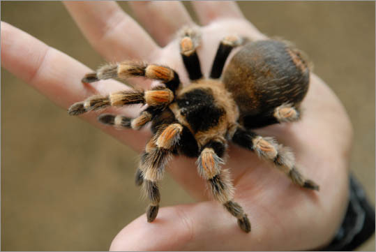Arachnologist Average salary: $61,660 The job: Arachnologists are biologists who study spiders of all shapes, sizes and varieties. Scary to people with: Arachnophobia (spiders) and entomophobia (insects)