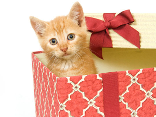 More than half of pet owners will buy gifts for their pets this holiday season and they will spend about $46, according to an AP-Petside.com poll. Are you looking for some fun gift ideas for your furry friend? Whether you are looking to spend a little or a lot, give toys, a comfy place to sleep, or baked treats, Boston.com Pets has you covered.