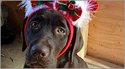 Your pets in holiday hats