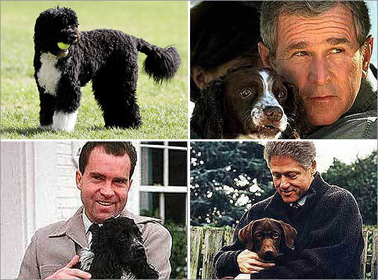 Behind many presidents is often a loyal pooch. From beagles and golden retrievers to Portuguese water dogs, many of our nation's leaders have had dogs while in the White House. Click through to see the pooches of past presidents.