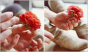 Make your own boutonniere and flower crown with Petal Floral