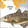 Pacific cod vs. Atlantic cod