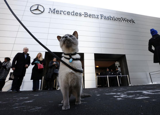 Purina ONE challenged misconceptions by featuring leash-trained cats during Fashion Week in New York as part of Purina ONE's Healthy Metabolism launch on Feb. 10.