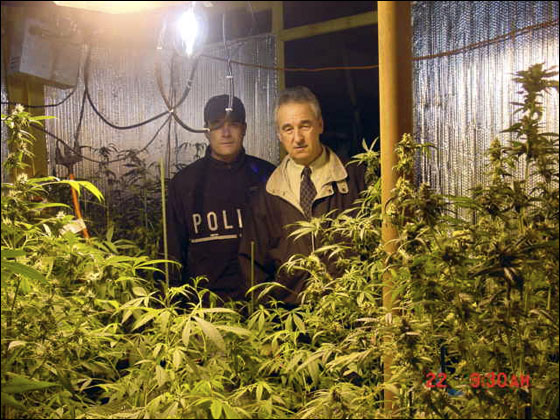 In this photo provided by the Hanover Police Department, Hanover, Mass. narcotics officer Jonathan Abban and Police Chief Paul Hayes, right, stand behind 175 marijuana plants found in Hanover, Mass. Tuesday, Nov. 22, 2005. Christopher Piersall, 34, son of Jimmy Piersall, a Red Sox center fielder in the 1950s, was arrested and charged with one count of cultivating, distributing and manufacturing marijuana, according to police. He also was charged with one count of trafficking marijuana more than 50 pounds, according to police.