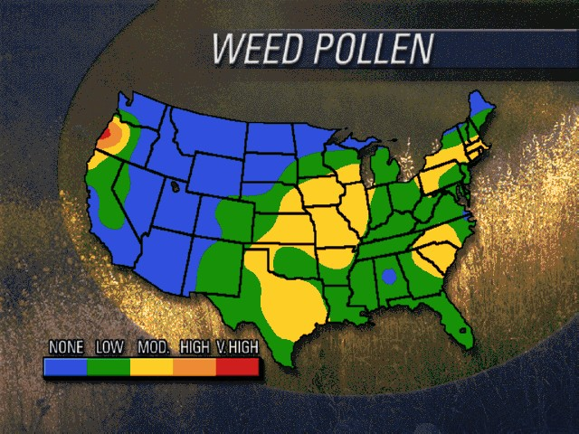 US weed pollen conditions
