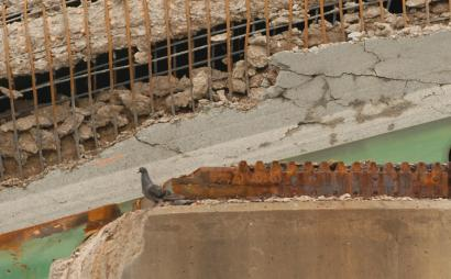 A pigeon perched on a section of the Interstate 35W bridge in Minneapolis that collapsed on Aug. 1.