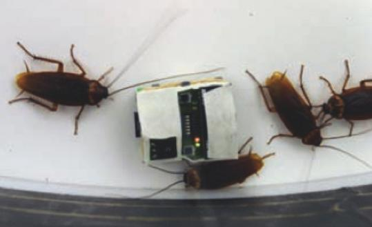 Scientists report that robotic devices modified the behavior of a laboratory colony of real cockroaches.