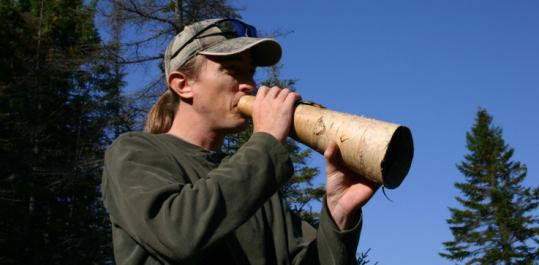 Guide Matt Tinker works his handmade birch-bark horn to attract the attention of rutting moose.