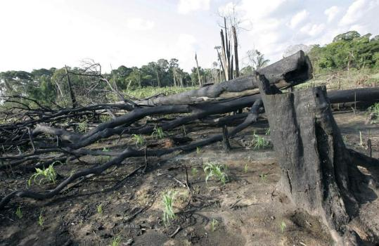 Scientists say the Amazon rainforest loses a Connecticut-sized chunk of woodland each year. Above, fire damage was evident in Xapuri, Brazil, in October.