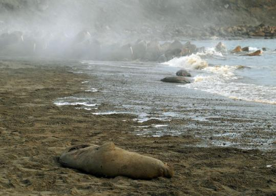 This photo showed a dead walrus after a stampede on Cape Vankarem, Russia, in March. Thousands of Pacific walruses above the Arctic Circle died in stampedes earlier this year.