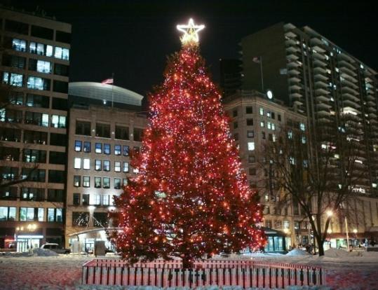 Christmas Tree Boston Common