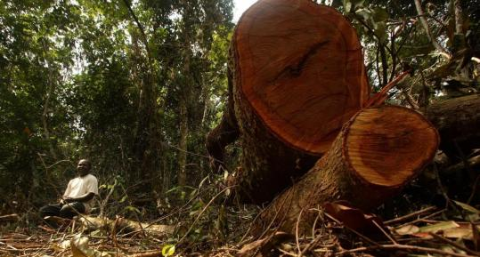 A man sat next to a felled tree at Afi mountain forest reserve near Ikom, Nigeria. UN special