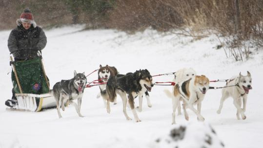 Musher Greg Vitello directed his team around Dorchester's Pope John Paul II Park during a sled dog event in January.