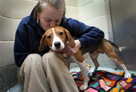 Bobby the beagle was kissed by Lydia Prysak at the Jamaica Plain MSPCA adoption center.