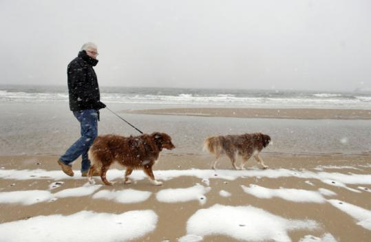 Paul Barclay, of Manchester, walked Sam and Scout on Singing Beach.