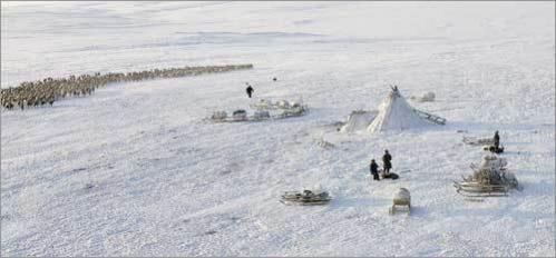 Reindeer, huts, and snow define a Nenets settlement in the tundra region near lake Juddein-To on the Yamal peninsula.