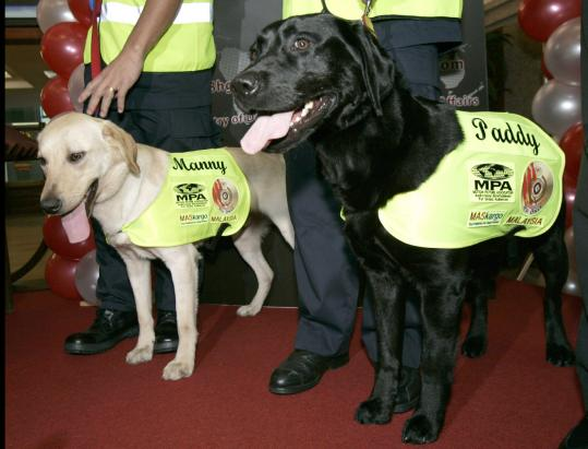DVD-sniffing dogs, Manny and Paddy, were given to Malaysia by the Motion Picture Association of America, which spent less than $24,000 to buy and train them, said Mike Ellis, the association's Asia-Pacific director.