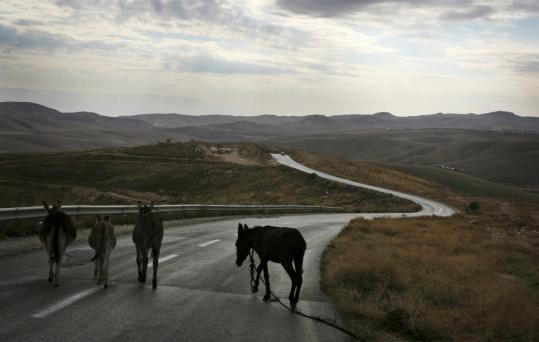 Donkeys crossed a road near Wadi Qelt in the West Bank, where Israel plans to build part of its separation barrier. Opponents say the barrier would cut off wildlife from a vital water source.