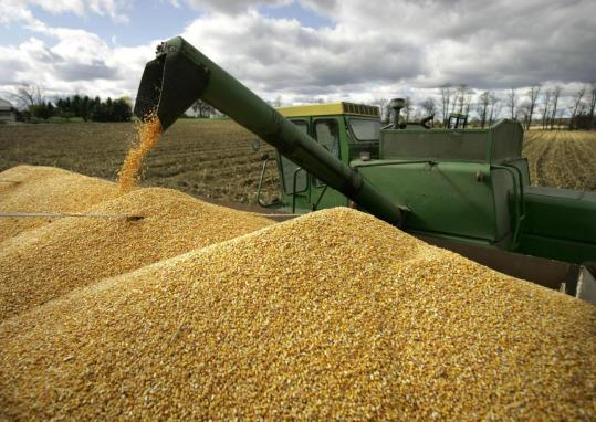 US corn production is expected to fall 8 percent this year from 2007 as farmers won't plant enough acres to meet de