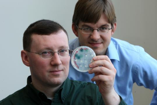 MIT grads and engineers Michael Raab (left), president, and Jeremy Johnson, vice president of Agrivida Inc., research way to inject high-potency proteins in corn to allow the husks and leaves to be converted to ethanol.