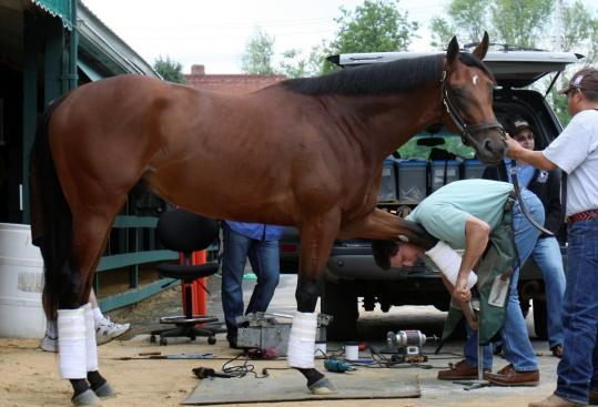 Big Brown is attended to at Pimlico Race Course in Maryland where he will attempt to win The Preakness Stakes, the second leg of thoroughbred racing's Triple Crown