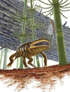The 'frogamander' fossil may solve a debate about the link among frogs, salamanders, and other amphibians.