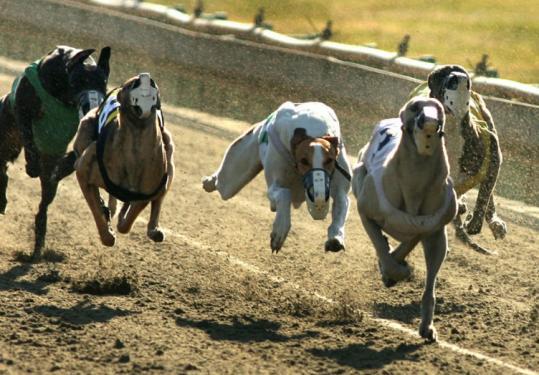 The proposed ban would shut down Raynham-Taunton Greyhound Park and Wonderland Greyhound Park in Revere.