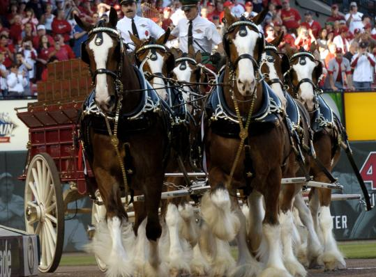 The famous Budweiser Clydesdales make an appearence in St. Louis. A purchase of Anheuser-Busch at the current price would be the biggest of a consumer company since 2005.