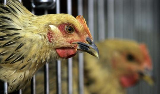 Bird flu fears are receding, but the disease could still trigger a pandemic if it becomes easily spread among humans.