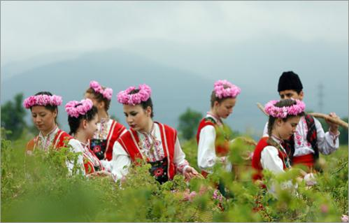 Bulgarian women in national dress gather roses during a ceremonial rose-picking near the town of Kazanlak.