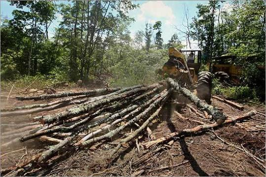 Oak trees are dying inside the South Eastern Bio-Reserve including the Freetown State Forest. Rodney Demoranville hauls wood from the forest. The trees are being attacked by gypsy moths,tent caterpillars,and winter moths.