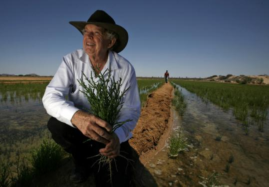 Carl Hodges, an atmospheric physicist, has developed a way to farm a salt-loving plant, salicornia, for food and biofuel.