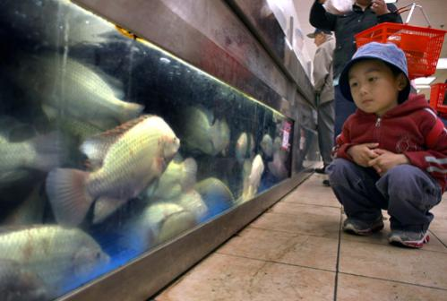 Andy Tan, 4, looks at the tilapia in the fish tank in the seafood department at C Mart Supermarket on Washington Street.