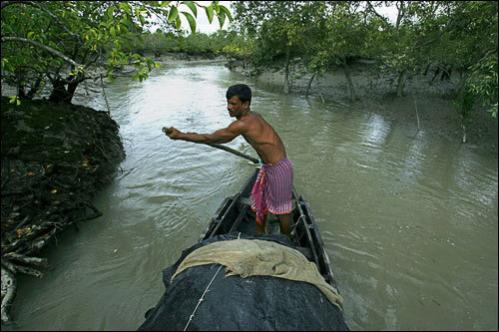 A fisherman named Uttam steers his boat through a creek in the Sundarbans, India, Monday, Aug. 4, 2008.